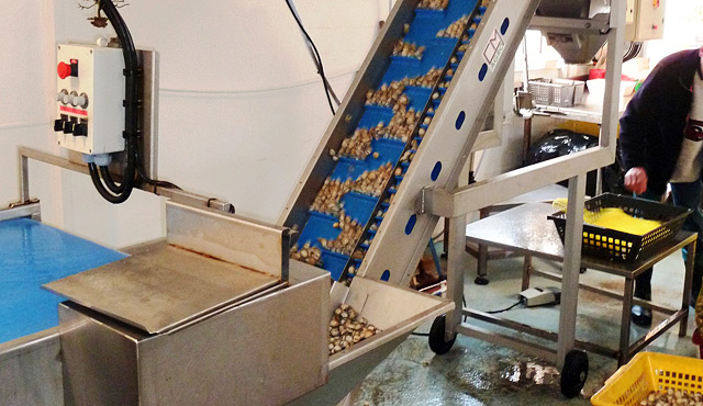 Machinery for other shellfishes