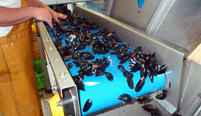 Mussels machinery